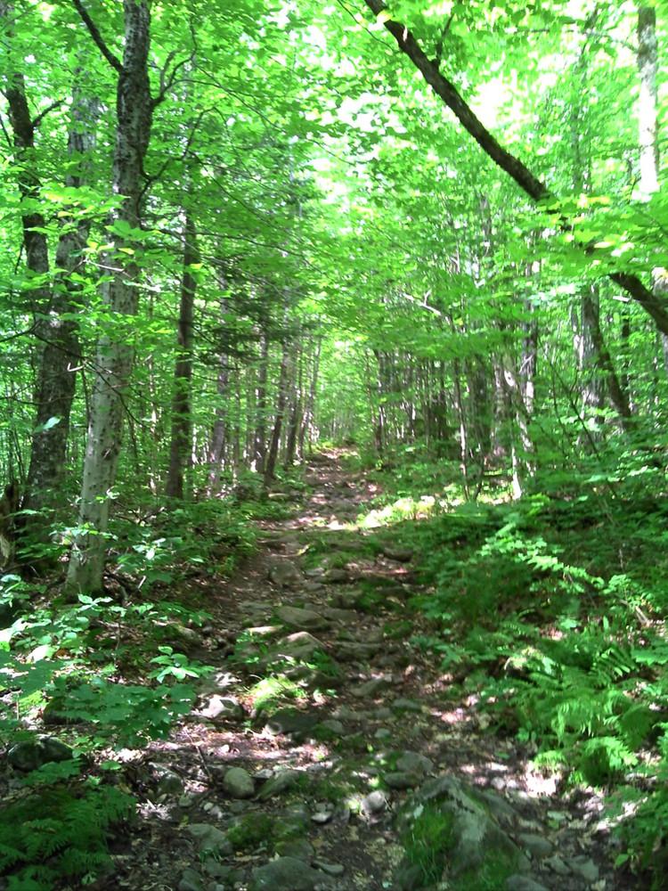 Big Moose Mountain Maine Trail Finder