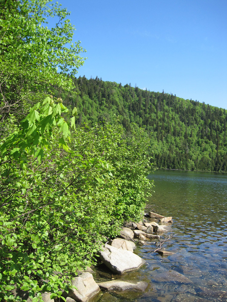 All Weather Tire >> Deboullie Public Reserved Land - Maine Trail Finder