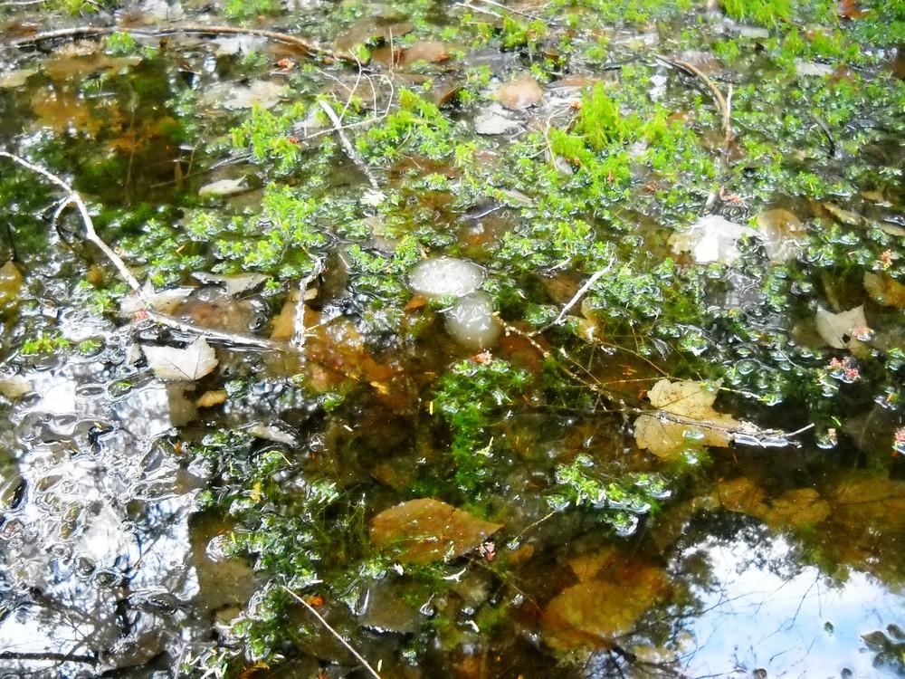 Center Pond Preserve Maine Trail Finder