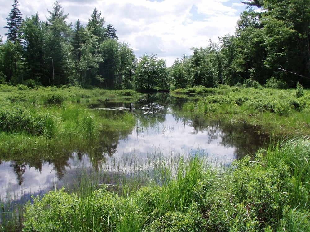 Northern Pond Natural Area Maine Trail Finder